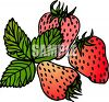 Bunch Of Ripe Strawberries clipart