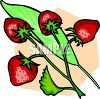 Fresh Strawberries Still On The Plant clipart