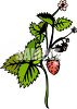 A Strawberry Plant clipart
