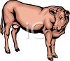 Realistic Mother Cow clipart