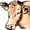 Realistic Blond Cow clipart