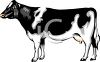 Realistic Black and White Dairy Cow clipart