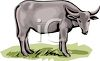 Gray Cow clipart