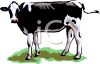Jersey Type Diary  Cow clipart