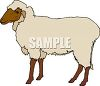 Wooly Sheep clipart