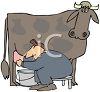 Man Milking a Cow and Squirting Himself in the Eye clipart