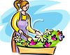 Woman Planting Flowers in a Window Box clipart
