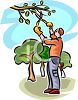 Man Pruning a Branch on a Tree clipart