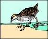 Sandpiper Bird Walking on the Beach clipart