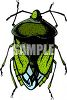 Green Leaf Eater Beetle clipart