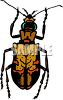 Small Brown Beetle clipart