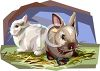 Realistic Style Rabbits clipart