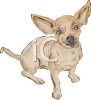 Chiuaua Puppy Sitting clipart