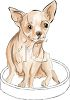 Chiuaua Puppy Sitting on His Bed clipart