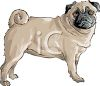Black Face Pug Puppy  clipart