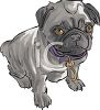 Cute Pug Puppy  clipart
