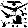 Silhouette of Different Kinds of Water Birds clipart