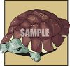 Large Turtle clipart