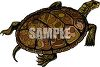 Green and Brown Turtle clipart