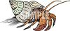 Cartoon Hermit Crab in His Shell clipart