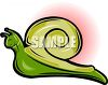Cute Cartoon Snail clipart