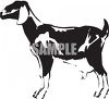 Black and White Milk Goat clipart