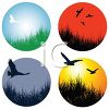 Collection of Birds in Nature Icons clipart