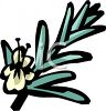 Rosemary Stalk clipart