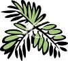 Oregano or Parsley clipart