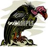 Realistic buzzard or vulture clipart