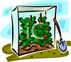 Tomatoes Growing in a Small Greenhouse clipart