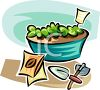 Lettuce Growing in a Tub from Seed clipart