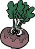 Beet Cartoon Character clipart