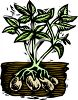 Potato Plant with the Potatoes Visible Under the Soil clipart