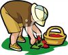 Little Boy Picking Strawberries clipart