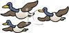 Geese migrating - flying north or south in V formation clipart
