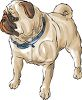 Realistic pug dog drawing clipart