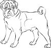 Pug dog drawing clipart