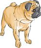 Dog breed - pug dog clipart