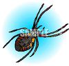 Orchard Spider clipart