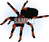 Red and Black Tarantula clipart