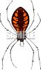 Garden Variety Orb Weaver Spider with Orange Stripes clipart