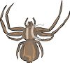 common spider image