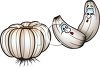 Cartoon Garlic Cloves and a Head of Garlic clipart