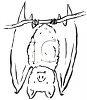 Black and White Line Drawing of a Vampire Bat Hanging Upside Down clipart