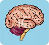 Human Brain Diagram for Medical Education clipart