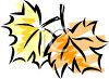 Changing Maple Leaves clipart