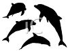 Silhouettes of Dolphins clipart