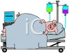 Cartoon of a Pig in a Hospital Bed with IVs clipart