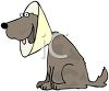 Cartoon of a Dog Wearing a Protective Cone Around His Neck clipart